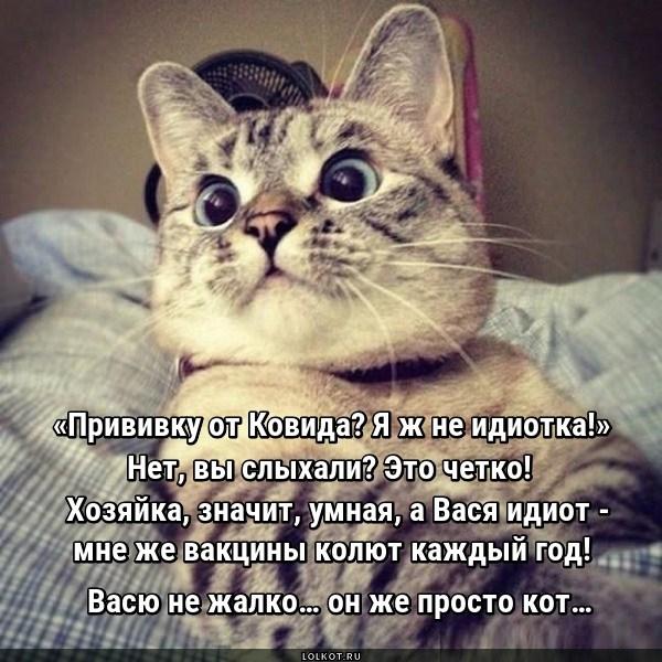 Нежалкий кот