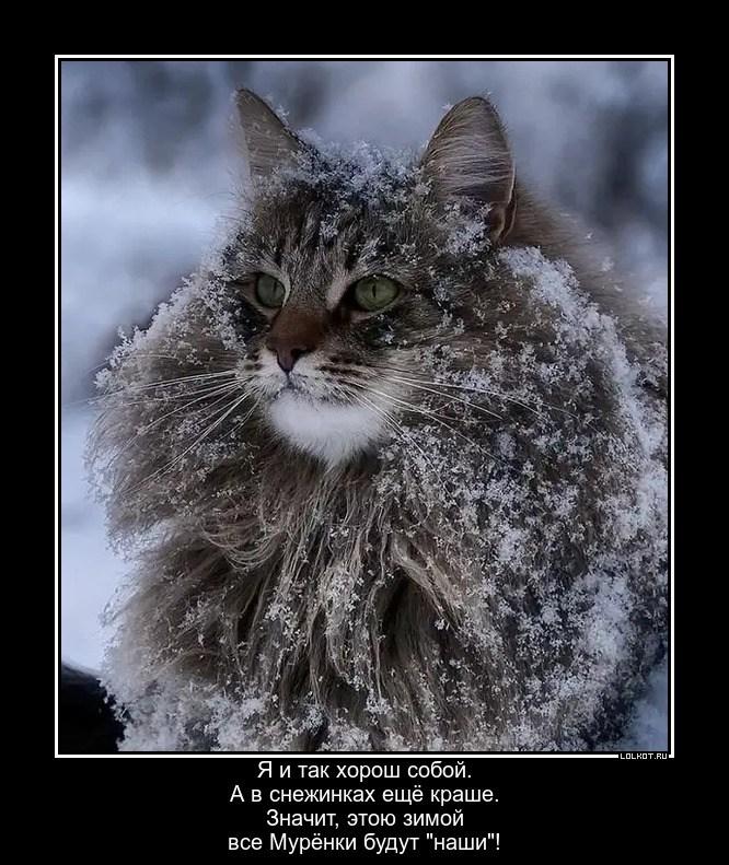 Зимний хорошист