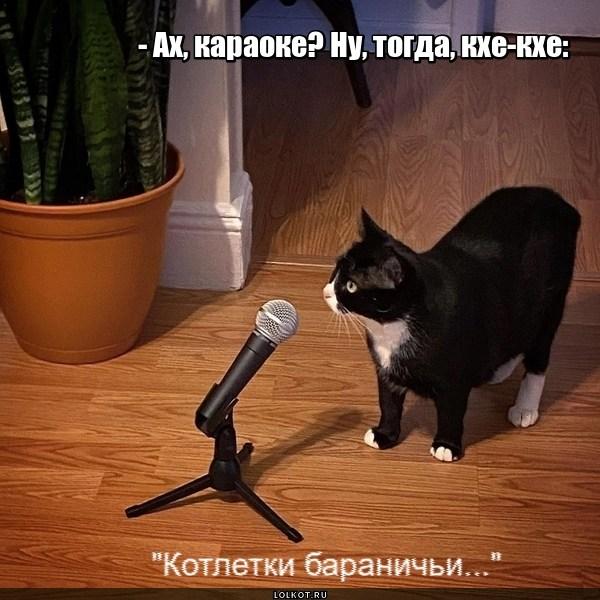 Котячье караоке