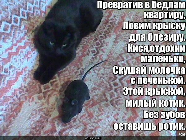 Блезирная крыска