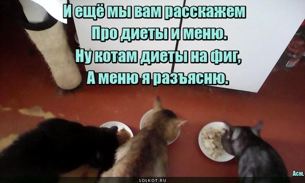Котячий метрдотель