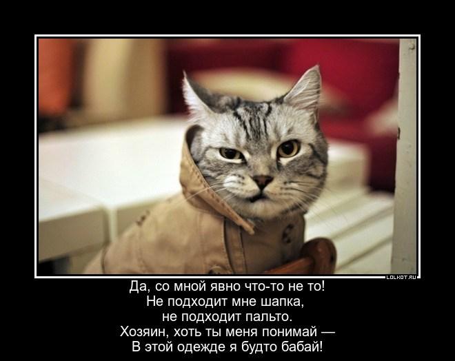Одежка не по кошке