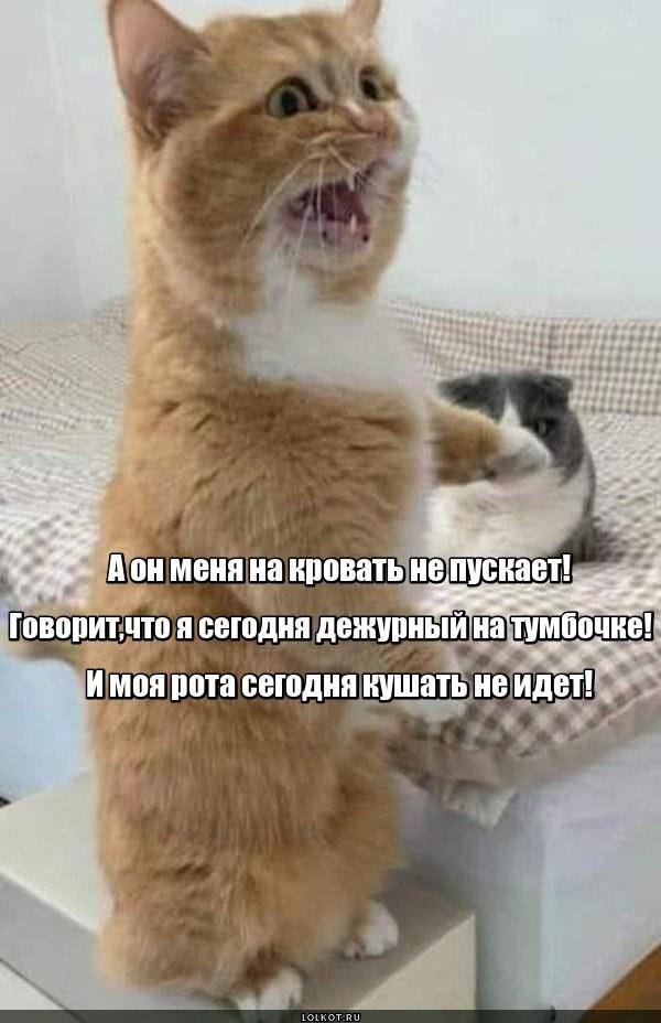 Прикроватная котовщина