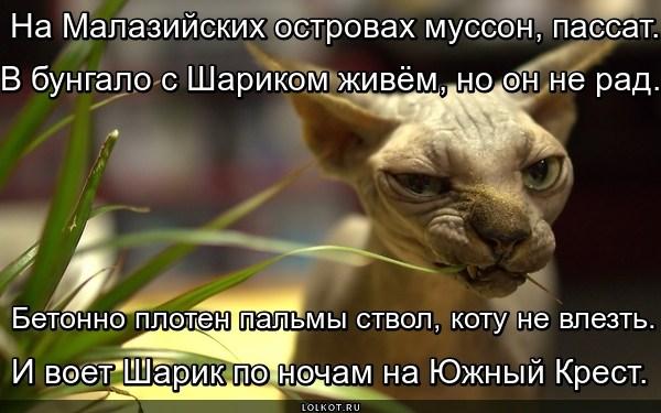 Тропик Собаки