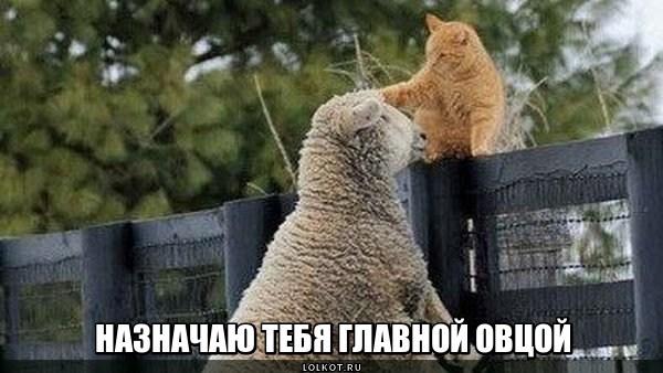 Главная овца