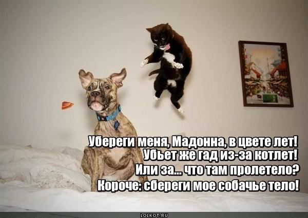 Пролетая мимо рта котушки