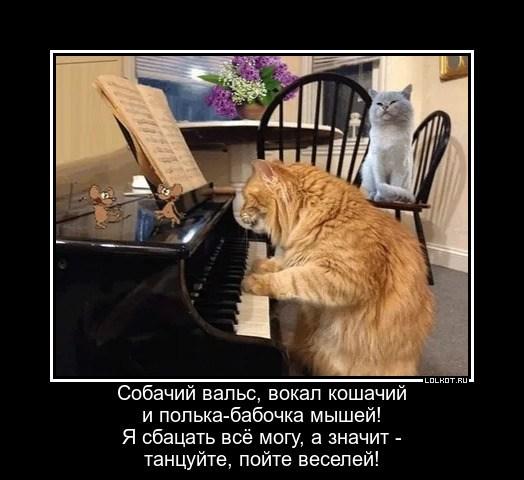 Развеселительный музыкант