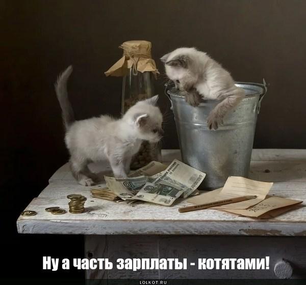 Котячья экономика
