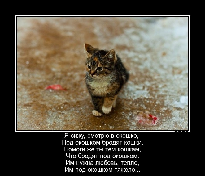 Подокошковые кошки